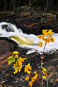 Bank Photos - Forest river in the fall by Elena Elisseeva