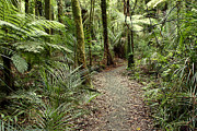 Jungle Beauty Art - Forest trail by Les Cunliffe