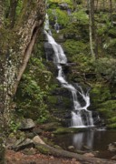 Stokes State Forest Prints - Forest Waterfall Print by Stephen  Vecchiotti