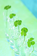 Four Leaf Clover Posters - Four Leaf Clover,in The Glass Bottle. Poster by Yagi Studio