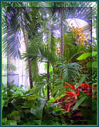 Trees Light Windows Prints - Franklin Park Conservatory Print by Mindy Newman