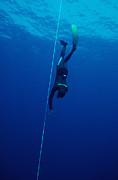 Free Diving Prints - Free-diving Competitor Print by Alexis Rosenfeld