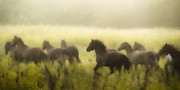 Wild Horses Photo Prints - Freedom Print by Ron  McGinnis