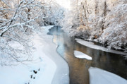 White River Scene Posters - Fresh Snowfall Poster by Thomas R Fletcher