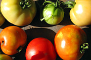 Vegetables Photo Framed Prints - Fresh Tomatoes Framed Print by Amy Tyler
