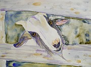 Goat Painting Originals - Friend by Stella Schaefer