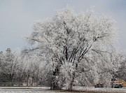 Winter Photos Prints - Frosted Tree Print by Loyd Hampson