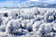 Reservoir Prints - Frosted Trees in Ogden Valley Utah Print by Utah Images