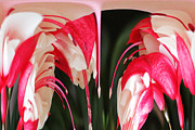 Russel Ray Posters - Fuchsia 4 Dripper Poster by Russel Ray