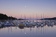 Bc Coast Posters - Full Moon Over Ganges Harbor Poster by Rob Tilley