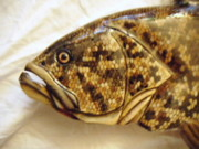 Aquatic Life Reliefs - Gag Grouper number three by Lisa Ruggiero