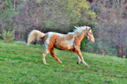 Palomino Photos - Galavant by Emily Stauring