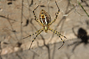 Shadow Photos - Garden spider by Cristina Lichti