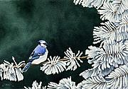 Blue Jay Prints - Geai bleu no. 2 Print by Caroline Boyer