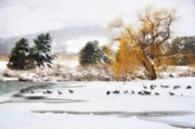 Snow Scene Framed Prints - Geese At The Lake  Framed Print by Kathy Jennings