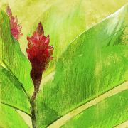 Leafy Mixed Media - Gingimbre by Kaypee Soh - Printscapes
