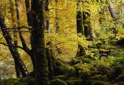 Forest Floor Posters - Glenveagh National Park, County Poster by Gareth McCormack