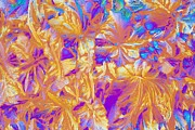 Crystalline Art - Glycine Crystals, Light Micrograph by Jerzy Gubernator