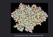 Glycogen Phosphorylase, Molecular Model Print by Francis Leroy, Biocosmos
