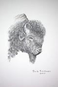 Animals Drawings - Goes-Where-He-Wants by Bud  Barnes