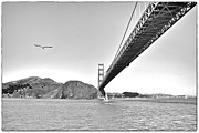 Seagull Pyrography Metal Prints - Golden Gate Bridge Metal Print by John Scharle
