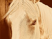 Forelock Photos - Golden  by JAMART Photography