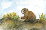 Wildlife Framed Prints Drawings Framed Prints - Golden Marmot Framed Print by Maureen Ida Farley