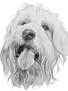 Designer Drawings Posters - Goldendoodle Poster by Barbara Keith