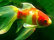 Amy Vangsgard Metal Prints - Goldfish Metal Print by Amy Vangsgard