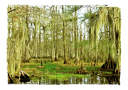 Moss Green Posters - Grand Bayou Swamp  Poster by Scott Pellegrin
