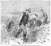 Great Catch Prints - Grasshopper Plague, 1888 Print by Granger