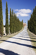 Tuscan Road Framed Prints - Gravel Road Lined with Cypress Trees Framed Print by Jeremy Woodhouse