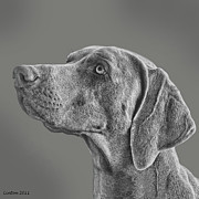 Weimaraner Posters - Gray Ghost Poster by Larry Linton