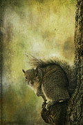 Nature Photo Art Prints - Gray Squirrel Print by Cindi Ressler