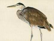 Ocean Shore Drawings Prints - Great Blue Heron Print by Heather Mitchell