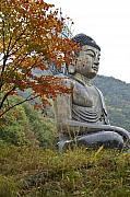 Buddhist Acrylic Prints - Great Buddha in Autumn Acrylic Print by Michele Burgess