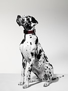 Great Dane Framed Prints - Great Dane, Portrait Framed Print by Michael Blann