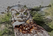 Drugs Greeting Cards Prints - Great Horned  Print by Jerry Cordeiro
