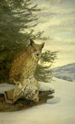 Bird Of Prey Art Paintings - Great Horned Owl by Louis Agassiz Fuertes