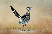 Roadrunner Framed Prints - Greater Roadrunner Framed Print by Betty LaRue