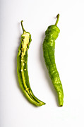 Hot Peppers Posters - Green Chili Pepper Poster by Photo Researchers, Inc.