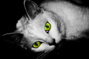 Cats Resting Posters - Green Eyes Poster by Angie McKenzie