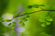 Green Color Art - Green Nature by Kristin Kreet