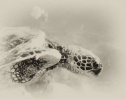 Hawaii Sea Turtle Art - Green Sea Turtle by Michael Peychich
