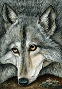 Realistic Wolf Framed Prints - Grey Wolf Framed Print by Barbara Ann Robertson