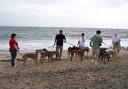 Greyhound Photos - Greyhounds on the Beach by Jim Vansant