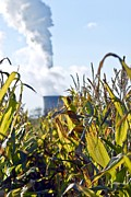Power Plants Framed Prints - Growing Maize For Biofuel Framed Print by Chris Knapton