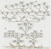 Genealogy Metal Prints - Guggenheim Family Tree Metal Print by Science Source