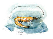 Watercolors Painting Originals - Gulf Shrimp by Paul Gaj