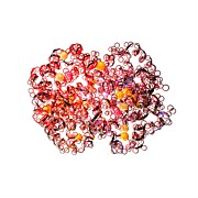 Coenzyme Photos - Haemoglobin Molecule by Animate4.comscience Photo Libary